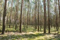 ψηλά δέντρα Στοκ Εικόνες