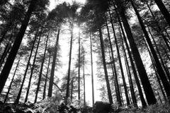 ψηλά δέντρα Στοκ εικόνα με δικαίωμα ελεύθερης χρήσης