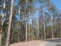 ψηλές ξυλείες στοκ φωτογραφία με δικαίωμα ελεύθερης χρήσης