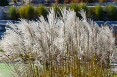 Ψηλές χλόες στο πρώτο πλάνο κήπων στοκ εικόνες με δικαίωμα ελεύθερης χρήσης
