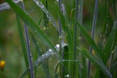 Ψηλή χλόη μετά από τη βροχή φθινοπώρου Στοκ εικόνα με δικαίωμα ελεύθερης χρήσης