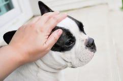 Ψηλαφήστε ένα σκυλί Στοκ φωτογραφία με δικαίωμα ελεύθερης χρήσης