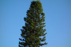 ψηλό δέντρο Στοκ Εικόνα