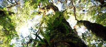 ψηλό δέντρο Στοκ εικόνα με δικαίωμα ελεύθερης χρήσης