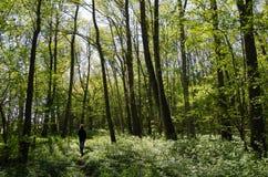 Ψυχαγωγικός περίπατος σε ένα πράσινο δάσος Στοκ φωτογραφία με δικαίωμα ελεύθερης χρήσης