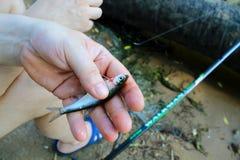 Ψυχρός, πιαμένος από έναν ψαρά σε μια ράβδο αλιείας, το καλοκαίρι της ημέρας Ιουνίου στοκ εικόνες