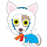 Ψυχρό Chihuahua Στοκ εικόνες με δικαίωμα ελεύθερης χρήσης