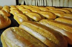 Ψωμί αρτοποιών Εγκαταστάσεις αρτοποιείων Παραγωγή του ψωμιού Φρέσκο άσπρο ψωμί από το φούρνο Στοκ φωτογραφία με δικαίωμα ελεύθερης χρήσης