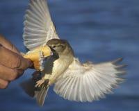 ψωμί πουλιών Στοκ φωτογραφία με δικαίωμα ελεύθερης χρήσης