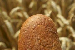 Ψωμί πριν από Cornfield Στοκ εικόνες με δικαίωμα ελεύθερης χρήσης