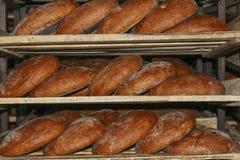 Ψωμί σίκαλης στα ράφια Στοκ Εικόνες