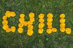 Ψύχρα επιγραφής στη χλόη Κίτρινα λουλούδια στοκ εικόνα