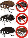 Ψύλλος - προειδοποιητικά σημάδια Στοκ φωτογραφία με δικαίωμα ελεύθερης χρήσης