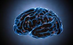 Ωθήσεις εγκεφάλου Σύστημα νευρώνων Ανθρώπινη ανατομία μεταφορά των σφυγμών και παραγωγή των πληροφοριών Στοκ Εικόνα