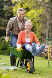 Ωθώντας σύζυγος συζύγων wheelbarrow Στοκ Φωτογραφίες