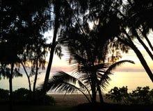 Ωκεάνια άποψη και φοίνικες Στοκ Φωτογραφία