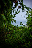 Ωκεάνια άποψη μέσω της πολύβλαστης τροπικής πρασινάδας Στοκ φωτογραφία με δικαίωμα ελεύθερης χρήσης