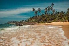 Ωκεάνια ακτή με τους φοίνικες καρύδων Τροπικές διακοπές, υπόβαθρο διακοπών Μαλακό κύμα στην άγρια εγκαταλειμμένη άθικτη παραλία Π Στοκ Εικόνες