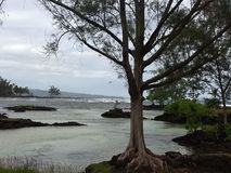 Ωκεάνια δέντρα νησιών της Χαβάης μεγάλα στοκ εικόνες