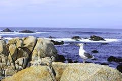 ωκεάνια θάλασσα γλάρων Στοκ φωτογραφίες με δικαίωμα ελεύθερης χρήσης