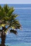 Ωκεάνια κατακόρυφος υποβάθρου φοινικών Στοκ Εικόνες