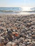 Ωκεάνια κοχύλια Στοκ φωτογραφίες με δικαίωμα ελεύθερης χρήσης