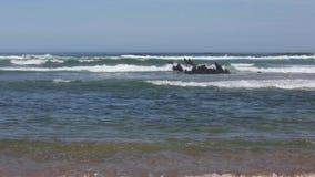 Ωκεάνια κυματωγή και μικροί σχηματισμοί βράχων απόθεμα βίντεο