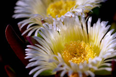 Ωκεάνια λουλούδια Στοκ φωτογραφία με δικαίωμα ελεύθερης χρήσης