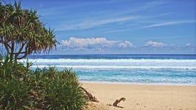 Ωκεάνια παραλία με τα πράσινα δέντρα 2 απόθεμα βίντεο