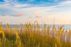 Ωκεάνια παραλία Στοκ Φωτογραφία