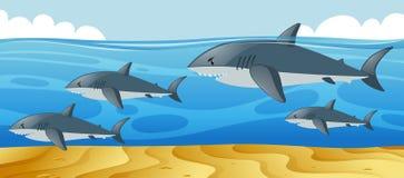 Ωκεάνια σκηνή με τους καρχαρίες που κολυμπούν στη θάλασσα ελεύθερη απεικόνιση δικαιώματος
