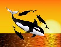 ωκεάνια φάλαινα Στοκ Εικόνες