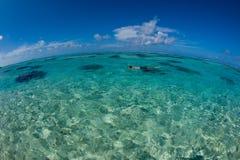 ωκεάνια όψη κολύμβησης με & Στοκ Εικόνα