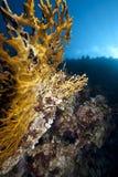 ωκεάνιος ήλιος κοραλλ& Στοκ φωτογραφία με δικαίωμα ελεύθερης χρήσης