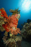ωκεάνιος ήλιος ψαριών κοραλλιών Στοκ φωτογραφίες με δικαίωμα ελεύθερης χρήσης