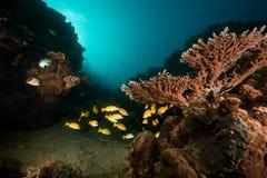 ωκεάνιος ήλιος ψαριών κοραλλιών Στοκ φωτογραφία με δικαίωμα ελεύθερης χρήσης