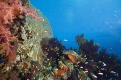 ωκεάνιος ήλιος ψαριών κο Στοκ φωτογραφίες με δικαίωμα ελεύθερης χρήσης