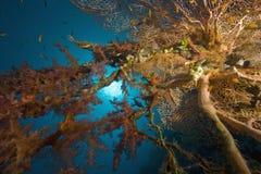 ωκεάνιος ήλιος ψαριών κο Στοκ φωτογραφία με δικαίωμα ελεύθερης χρήσης