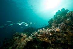 ωκεάνιος ήλιος ψαριών κο Στοκ Φωτογραφία