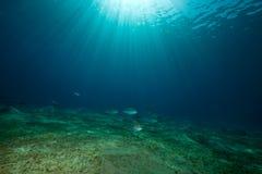 ωκεάνιος ήλιος ψαριών Στοκ Εικόνα