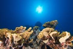 ωκεάνιος ήλιος ψαριών Στοκ φωτογραφίες με δικαίωμα ελεύθερης χρήσης