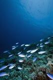 ωκεάνιος ήλιος ψαριών Στοκ εικόνες με δικαίωμα ελεύθερης χρήσης