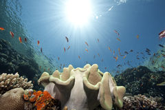 ωκεάνιος ήλιος ψαριών Στοκ φωτογραφία με δικαίωμα ελεύθερης χρήσης