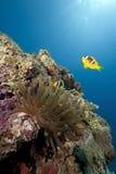 ωκεάνιος ήλιος anemone Στοκ φωτογραφία με δικαίωμα ελεύθερης χρήσης