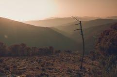 Ωκεάνιο δέντρο ήλιων βράχων ομίχλης βουνών Στοκ Φωτογραφίες