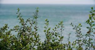 Ωκεάνιο αεράκι μέσω των θάμνων απόθεμα βίντεο