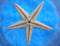 ωκεάνιο αστέρι Στοκ Φωτογραφίες