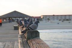 Ωκεάνιο ηλιοβασίλεμα πουλιών στοκ εικόνα