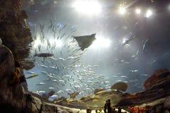 ωκεάνιο πάρκο του Χογκ Κογκ Στοκ εικόνα με δικαίωμα ελεύθερης χρήσης