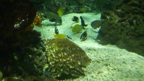 Ωκεάνιο υπόβαθρο τριάντα δεύτερων ψαριών σε έναν ωκεανό απόθεμα βίντεο